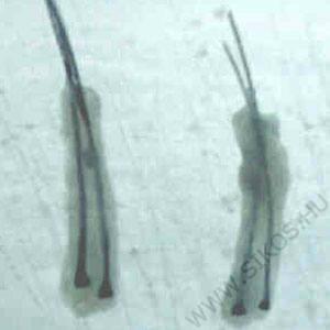 Kéthajszálas graftok